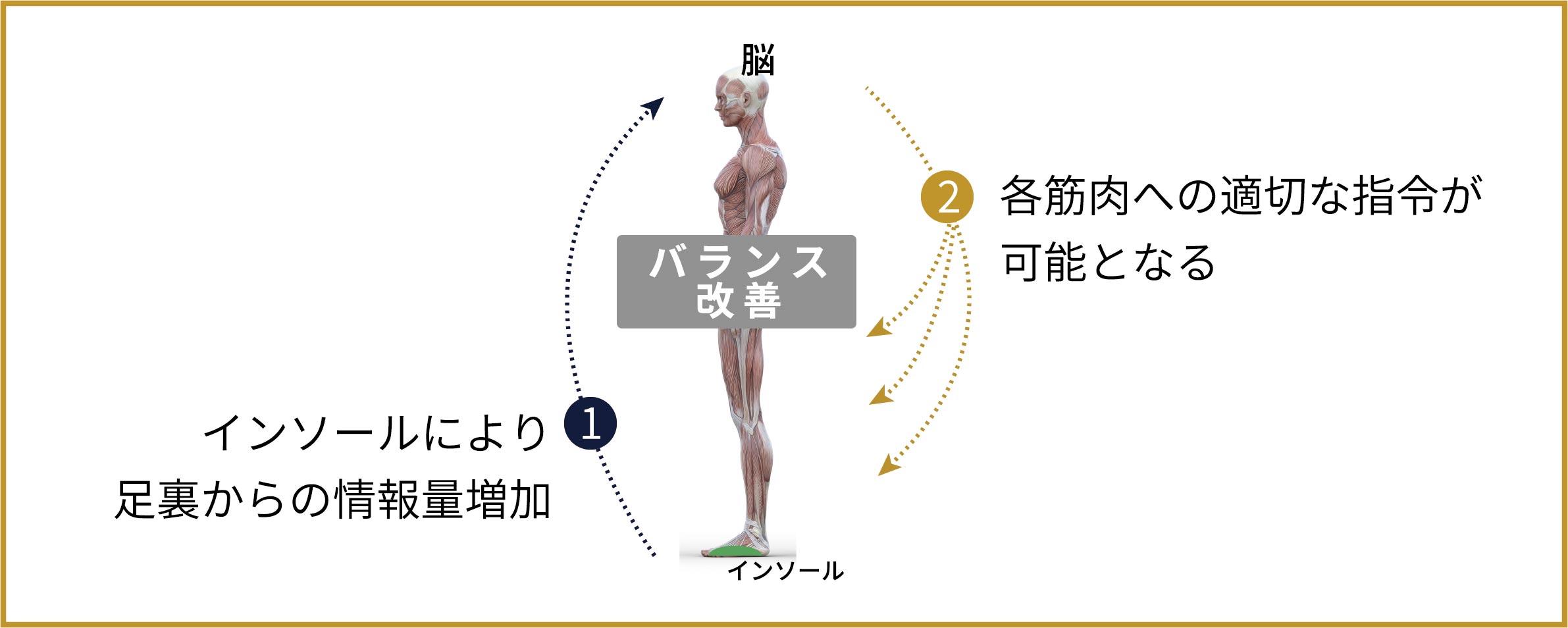1.インソールにより足裏からの情報量増加 2.各筋肉への適切な指令が可能となる バランス改善